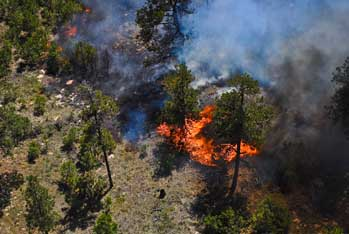remote piloted aerial survey of fire detection in forest